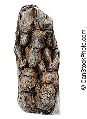 part of dried cedar bark