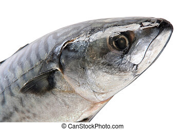 Part of mackerel