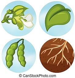 Part of plant part illustration