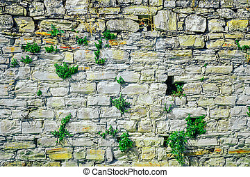 Part of the old stone wall with vegetation