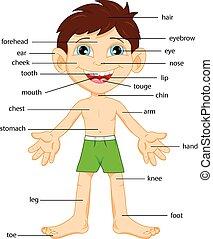 parte corpo, vocabolario