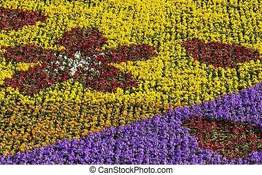 parterre fleurs, coloré
