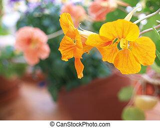parterre, fleurs