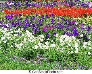 parterre fleurs