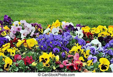 parterre fleurs, rainbaw