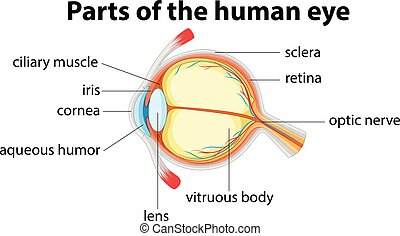 partes, de, olho humano, com, nome