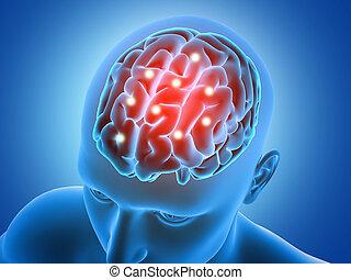 partes, figura masculina, cerebro, destacado, 3d