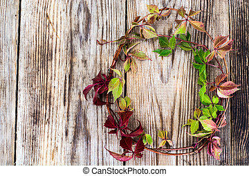 Parthenocissus on Wooden Rustik Background Natural Photo
