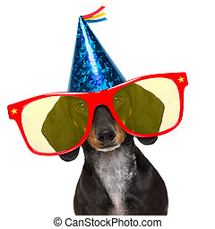 parti, födelsedag, hund, lycklig