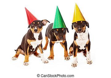 parti, valp, Födelsedag