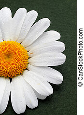 Partial view of a daisy on green background