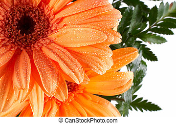 Partial view of a daisy on white background