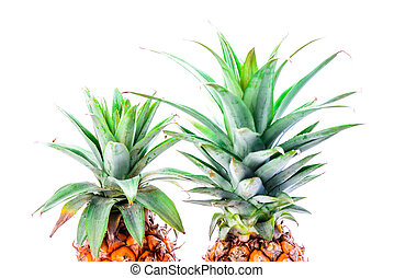 Partial view of pineapples and copyspace isolated on white