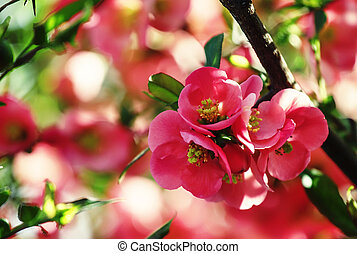 Partially blurred natural background with pink flowers, shallow depth of field