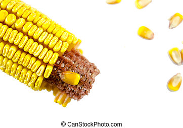 Partially crumbled corn and corn grains isolated