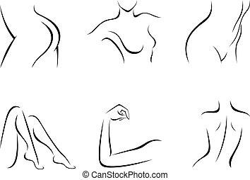 parties du corps, illustration, femme, ensemble, vecteur, ...