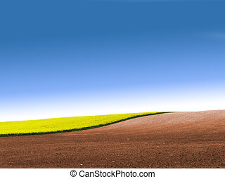 Partly ploughed field with rape and blue sky