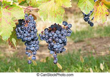 partner in the vineyard