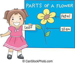 Parts of a Flower - Illustration of a Girl Identifying the...