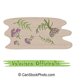 Root and Stems of the Valerian Plant on the Wooden Cutting Board. Curved Shape of the Board with Wood Texture. Herbal with Latin Name Valeriana Officinalis. Leaflet for Traditional Herbal Medicine.