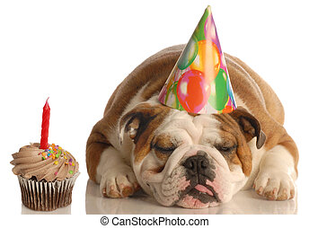 party animal - party pooper - english bulldog with birthday...
