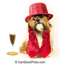 A sporty Shih Tzu is dressed in a fancy red sequin vest with lace inset, red bow tie and red top hat.