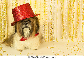 Party Dog in a Red Top Hat