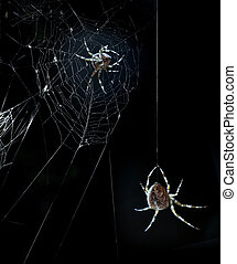 Party spiders in Halloween night