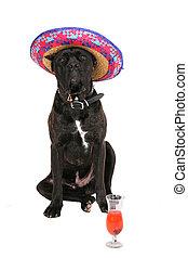 partying mastiff - one celebrating party loving large black...