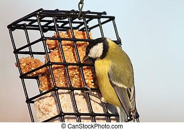 parus major feeding on lard
