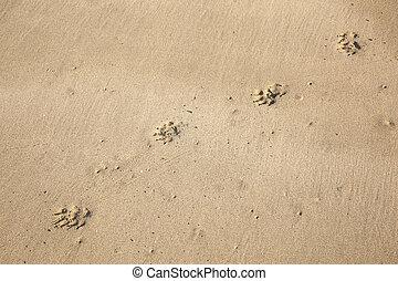 pas, plage, chien