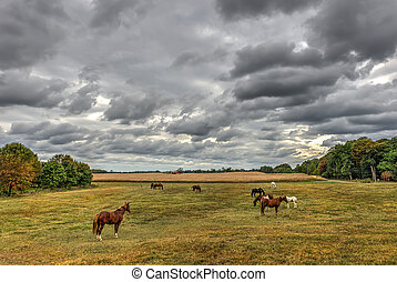 pascolo cavalli, su, uno, maryland, fattoria, in, autunno