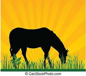 pascolo, cavallo, vettore, erba, illustra