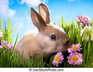 pasen, baby konijn, op, groen gras, met, lentebloemen