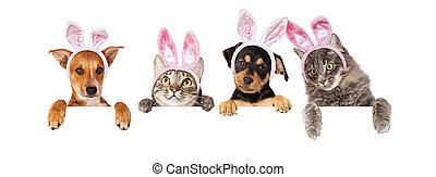pasen, honden, en, poezen, hangend, op, witte , spandoek