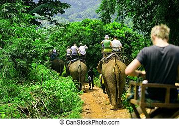 paseo, elefante