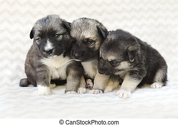 pasgeboren, hondjes, groep