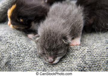 pasgeboren, katjes