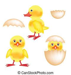 pasgeboren, nestling, hen