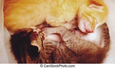 pasgeboren, slapende, katjes