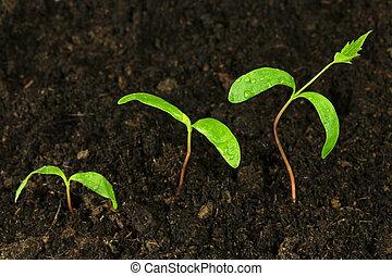 paso, de, crecer, planta verde