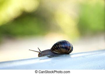 paso, snail's