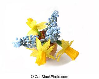 pasqua, fiori, in, conchiglia uovo