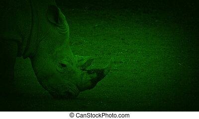 passé, nightvision, rhinocéros, promenades