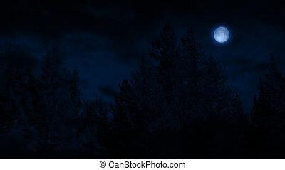 passé, nuit, voler, forêt, lune