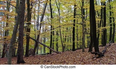 Passage inside forest covered in colorful orange and yellow leaves. Drone flying through woodland passing trees and branches.