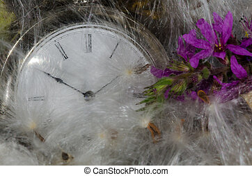Passage of Time: Pocket Watch Resting in a Soft Bed of...
