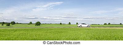 passager voiture, par, campagne, conduite, petit