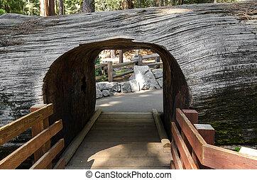 passaggio, in, sequoia