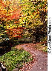 passeggiata, modo, attraverso, colorito, albero
